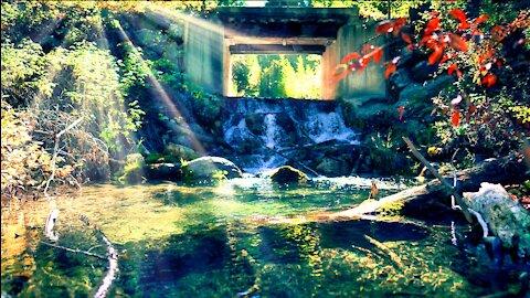 Relaxing Waterfall Creek 4K (Get Your Feet Wet)
