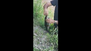 Fishing a hard fish