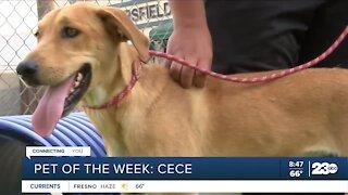 Pet of the week: Cece
