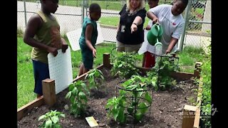 Students learn about more than math and reading at Urban Greenhouse