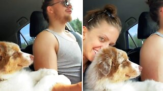 """Aussie puppy """"helps"""" her owner drive the car"""