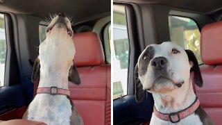 Pup howls every time she hears a firetruck siren