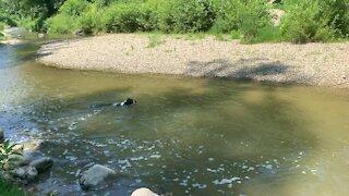 Funny dog floats down creek