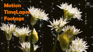 Motion Timelapse Flower and Plants Blooming. Stock video footage collection