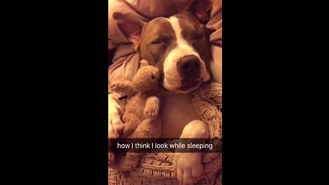 Allow this pit bull to accurately portray how we all feel about sleeping. The reality is too funny!