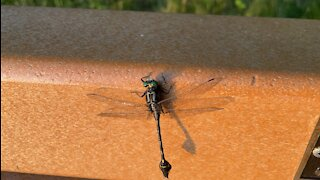 A dragonfly on the bench
