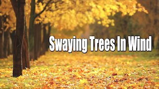 Relaxing Music | Leaves Falling sounds | Autumn Trees in the Wind | Nature sounds for deep sleep