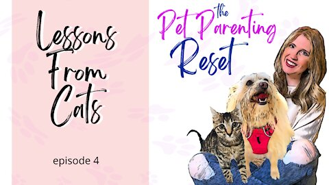 Lessons From Cats | The Pet Parenting Reset, episode 4