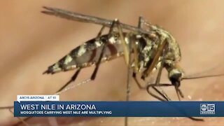 Mosquitoes carrying West Nile virus multiplying in the Valley