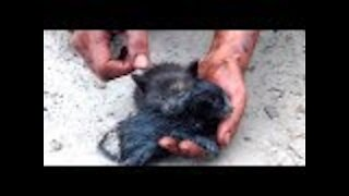 Kittens Rescued From Oil Spill by Heroic Man
