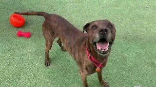 Cleveland APL Pet of the Weekend: Tyson, an affectionate 13-year-old dog