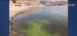 Toxic algae blooms detected at Lake Mead