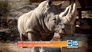 Out of Africa Wildlife Park: Meet Jericho the rhino