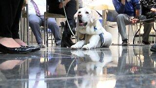 A four-legged courtroom companion celebrates his birthday