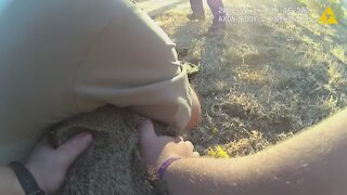 Police officers release deer from a hammock