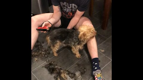 Dog Turns Into Wind Up Toy When Groomed