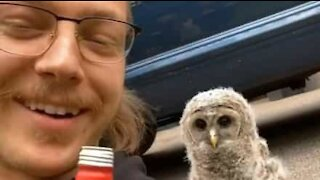 Man and baby owl become friends