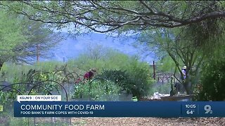 Growing their own food, community farmers cope with social distancing