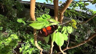 Butterfly House ~ Inside Look