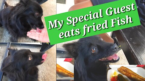 My Special Guest eats fried Fish