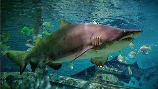 'Shark Week' Coming Soon