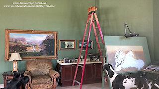 Great Danes Watch Funny Cat Climb A Ladder