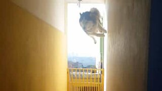 Dog pulls the most amazing parkour trick