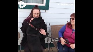 Woman Surprises Her Best Friend With A Dog