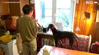 Bimbo suona la tromba, cagnolino lo accompagna ululando