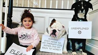 'Unemployed' therapy animals still making house calls