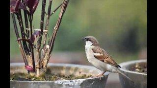 Little bird attempts home invasion
