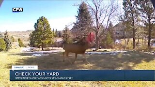 Protect your yard from animals with antlers