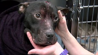 New bill aims to make animal abuse a federal crime