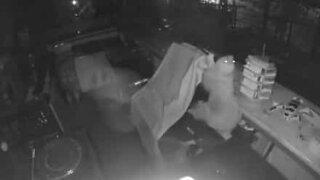 Preguiça invade restaurante durante a noite!