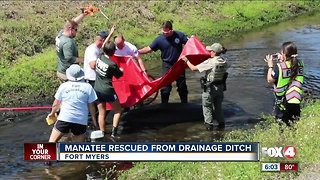 Community comes together to save a stranded manatee