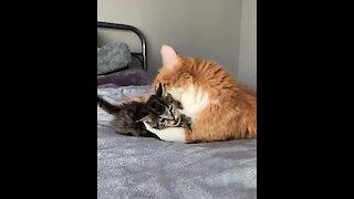 These kitten best friends will melt your heart!