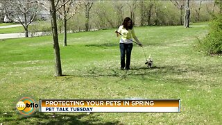 Pet Talk Tuesday Protect your pet in spring