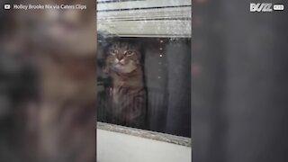 Cat goes crazy under quarantine!