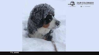 Our beautiful snowy Colorado through your photos