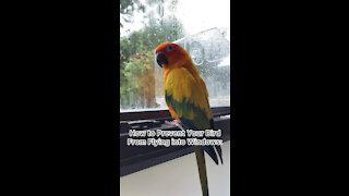 How to prevent your bird from flying into windows