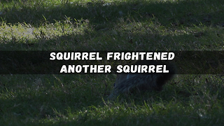 Squirrel Frightened Another Squirrel