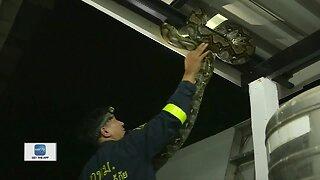 Snake Wrangler funny
