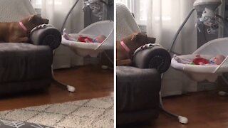 Sweet doggy loves watching over her baby sister