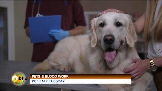 PET TALK TUESDAY - WELLNESS BLOODWORK