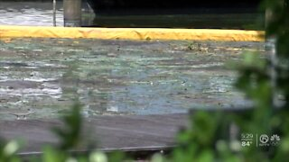 Palm Beach County has most toxic algae blooms, test results find