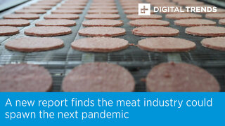 A new report finds the meat industry could spawn the next pandemic.