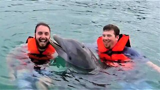 Affectionate dolphin has heartwarming interaction with young swimmer