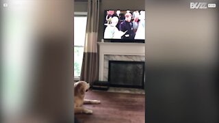 Cane entusiasta nell'assistere al matrimonio reale