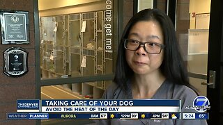 Taking care of your dog on hot days