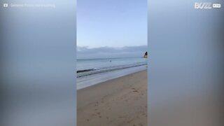 Un kangourou se baigne sur une plage australienne !